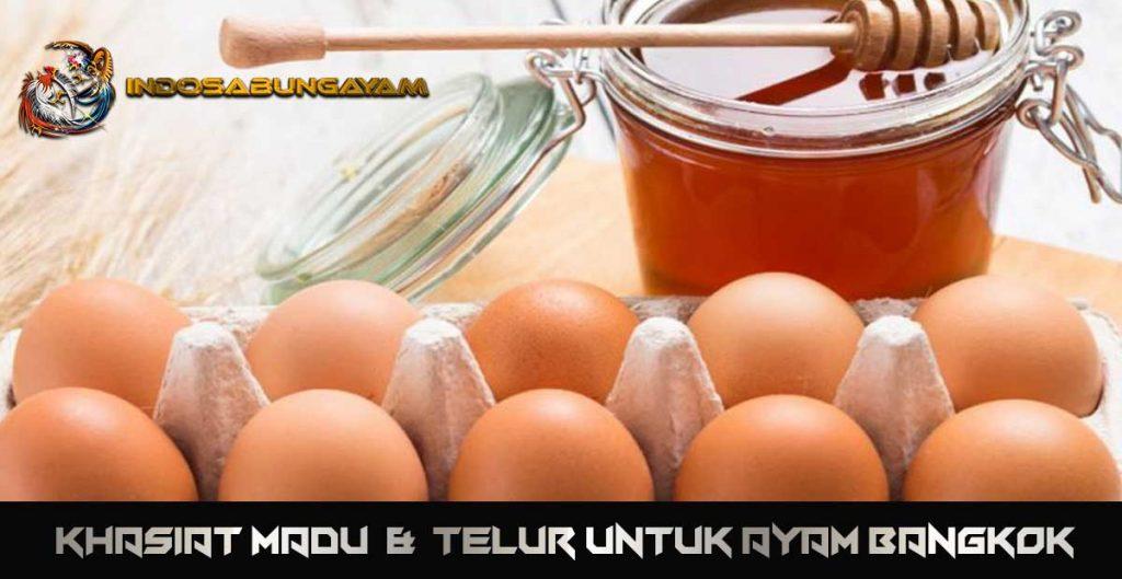 Khasiat Madu dan Telur untuk Ayam Bangkok
