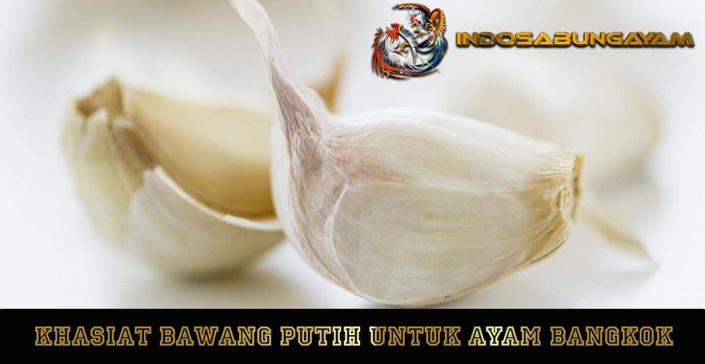 Khasiat Bawang Putih Untuk Ayam Bangkok