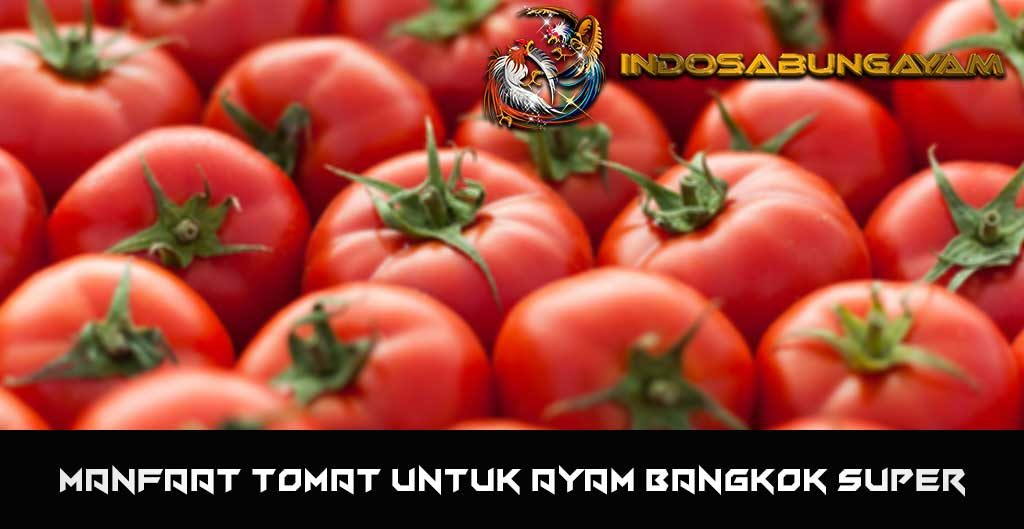 Manfaat Tomat Untuk Ayam Bangkok Super