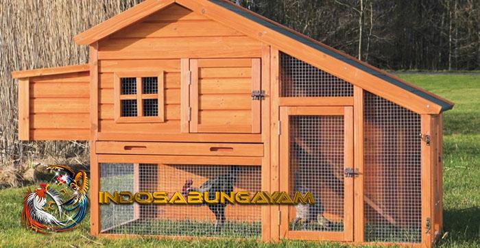 Membersihkan Kandang Ayam Aduan Memiliki Cara Khusus